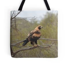 Wedge-tailed Eagle by BirdBags Small