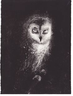 Owl (2013), etching - Sophie Lécuyer