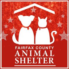 #shelterpetadvocateFrom the Fairfax County Animal Shelters... fairfax fairfax city fairfax county fairfax va fairfax virginia  #shelterpetadvocate  From the Fairfax County Animal Shelters Facebook page:  2014: -For the first time in the shelters history more than 2000 animals were adopted. -Volunteers contributed 25000 of service. -More than 500 animals were transferred in from under-resourced shelters and rescues. -Foster homes provided safe haven for hundreds of shelter pets. -Pit bull…