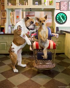 Funny animal and stock picture of a bulldog giving a Chihuahua a tattoo in a Tattoo parlor. Funny Dog Photos, Funny Animal Pictures, Funny Animals, Pet Pictures, Bulldog Pics, Funny Bulldog, French Bulldog Rescue, Animal Dress Up, Bulldog Tattoo