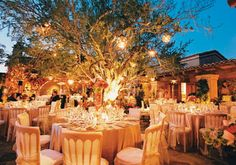 A big tree in the middle of everything with lots of lights. Country wedding ideas. Im picturing it now!