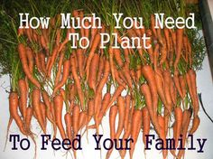 How Much To Plant To Feed Your Family--wow! That's a lot! Hopefully one day we will be able to grow that much!