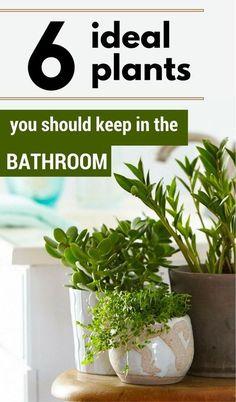 6 ideal plants you should keep in the bathroom. #InteriorDesignPlants