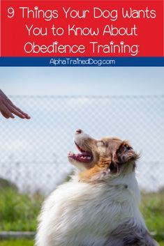 Obedience Training: 9 Things Your Dog Wants You to Know - Alpha Trained Dog Leash Training, Best Dog Training, Puppy Training Classes, All Breeds Of Dogs, Pet Care Tips, Dog Park, Best Dogs, Your Dog, Pets