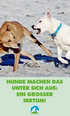 Hunde machen das unter sich aus: ein großer Irrtum! Jetzt im Haustier Notfallkarte Hunde Blog! #hunde #wissen