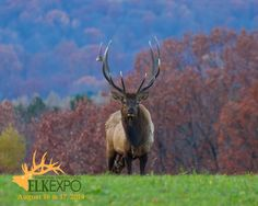 Mark your calendars for the 2014 Pennsylvania Great Outdoors Elk Expo!  August 16 - 17 at the Elk Country Visitor Center in Benezette, Pennsylvania.  Home to the largest free-roaming elk herd in the eastern U.S.  Over 11,000 visitors traveled to the PA Wilds for the 2013 Elk Expo!