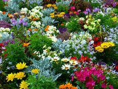 Färgglad plantering.
