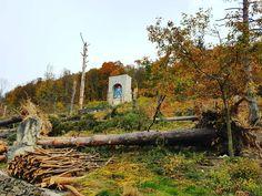 Resilient faith. #nature #tree #storm #Christagram #Romania #Transilvania #Transylvania #Siebenbürgen