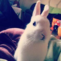 Dude! - Sassy Bunny!