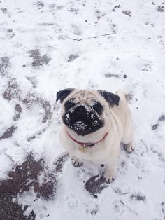 """The snow. I eat it. It's cold."""