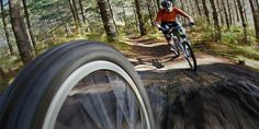 Mountain biking adventures for everyone at Woodhill.