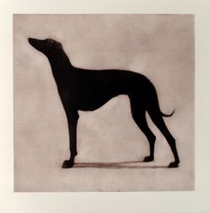 Scottish printmaker Helen Fay: Greyhound. Etching