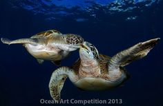 Winners of the Ocean Art Underwater Photo Competition snapped some of the year's best images of sharks, marine mammals and other sea life. Underwater Photos, Underwater World, Underwater Photography, Underwater Creatures, Turtle Images, Turtle Love, Happy Turtle, Mundo Animal, Tortoises