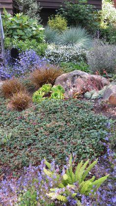 Tamar Carson Landscaping - Oakland, CA, United States. Berkeley brown shingle detail #2