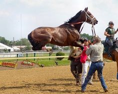 This photo was taken in May 2004 at Pimlico Race Course in Baltimore. The horse, Stephan's Angel, was not very happy being saddled for the Miss Preakness Stakes and leaped straight up in the air. She went on to finish second in the race and is now a broodmare on a farm in Kentucky. This photo was printed in Mid Atlantic Thoroughbred magazine and won the Eclipse Award for best thoroughbred horse racing photo of 2004.