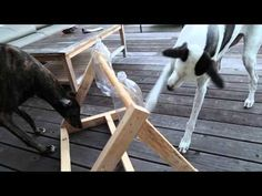 This man needed something to keep his Greyhounds occupied, so he created a puzzle for dogs, and I love the results! Pet Dogs, Dogs And Puppies, Dog Cat, Animals And Pets, Cute Animals, Diy Dog Toys, Toy Diy, Dog Puzzles, Homemade Dog Treats