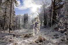 Gastbeitrag: Winterfotografie Tipps - Fashionladyloves Snow, Nature, Outdoor, Photos, Photo Mural, Future, Forests, Summer, Tips