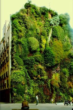 vertical garden, Madrid