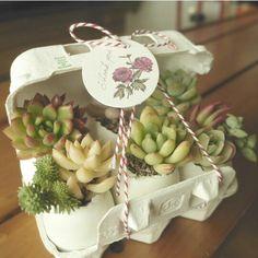 Succulent idea