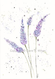 Springtime Lavender  Original watercolor 5x7 by claireswilson, $25.00