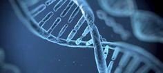 Descubren los genes del secreto del envejecimiento