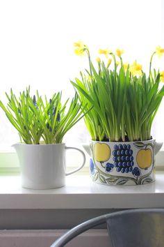 Paratiisi_Arabia Bulb Flowers, China Porcelain, Easter Ideas, Beautiful Flowers, Bloom, Jar, Spring, Plants, House