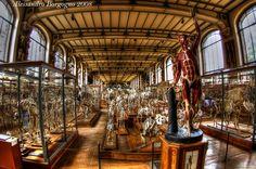 France - Paris - Muséum national d'histoire naturelle - Le Muséum