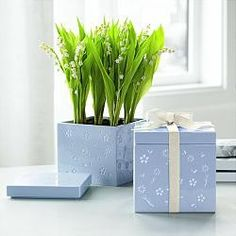 lily of the valley growing kit