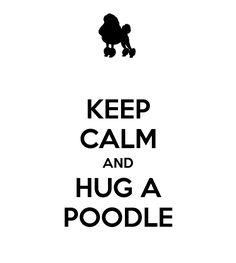 keep calm and hug a #poodle