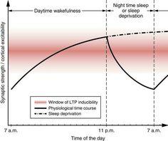 なぜ人は人生の3分の1近い時間を睡眠に費やすのか、睡眠の意義については完全には解明されていません。しかし、睡眠不足の脳は興奮状態にあり、記憶に大切な脳の柔軟性である「可塑性」が失われてしまうという