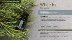 Used as building material and Christmas Trees, the white fir tree produces an essential oil that is known for evoking feelings of stability, energy, empowerment, and comfort.
