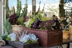 striking container gardens - Google Search
