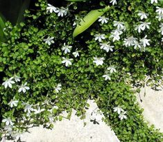 Herbs, Plants, Gardening, Cover, House, Home, Lawn And Garden, Herb, Plant