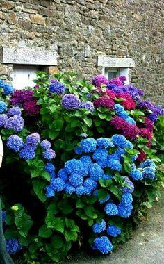 Flower garden idea.                                                                                                                                                                                 Más