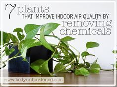 Plants on pinterest ice plant succulent seeds and house for Best plants to improve air quality