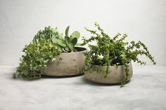 Shop our Sheridan Stratton Cement Bowl in stone. Shop online for free shipping Australia wide. Wall, Stratton, Outdoor Tables, Stone, Wall Art, Wall Art Decor, Bowl, Homeware