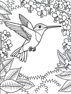 10 Humming Bird Coloring Pages Pictures Birds Wallpaper