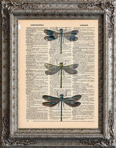 dragonflies on old paper