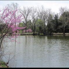 Morton Arboretum!!  Engagement pictures here :)