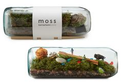 UncommonGoods MOSS TERRARIUM BOTTLE | Sumally