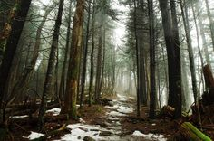 Clingmans Dome. The Great Smoky Mountains National Park [3802x2526][OC]
