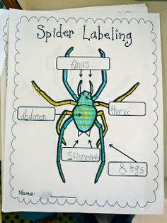 Spider labeling worksheet