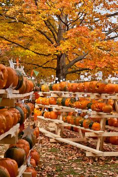 Autumn is a great time for harvest festivals, and the pumpkin festival in Keene, Cheshire County, New Hampshire, USA is a great place to get into the seasonal spirit. It's also a fun time to pick out a pumpkin for making a Halloween jack-o-lantern!