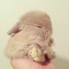 Omg I wanna squish him!
