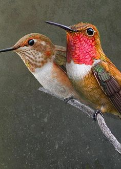 Rufous Hummingbirds by R Christopher Vest - One-third of the proceeds from his work goes to animal welfare. / Fine Art America
