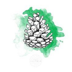 pinecone drawing