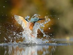 After 6 Years And 720,000 Attempts, Photographer Finally Takes Perfect Shot Of Kingfisher | Bored Panda