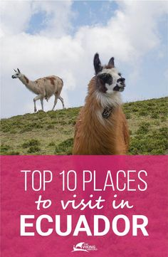 If you are thinking about visiting Ecuador, these are the 10 most interesting places to visit and cover the highlights. The Viking Abroad, travel. Ecuador Travel, Bolivia Travel, South America Destinations, South America Travel, Cool Places To Visit, Places To Travel, Travel Destinations, Equador Quito, Travel Abroad
