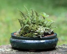 """Kusamono (literally """"grass thing"""") and shitakusa (literally """"undergrass"""") are a potted collection of plants designed to be viewed either in accompaniment with bonsai or alone."""