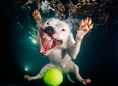 "EL FOTÓGRAFO SETH CASTEEL Y SUS UNDERWATER DOGS:""GO AND GET IT"""